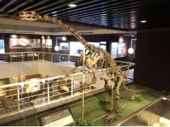思看3D扫描技术,还原云南禄丰龙,带你穿越亿万年,重返侏罗纪