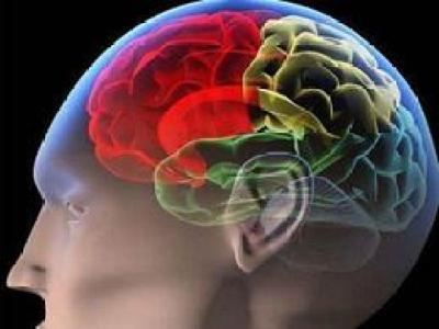 实验室培养的类脑器官能像婴儿大脑般成熟